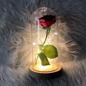 ✨NEW Rose Glass Light✨
